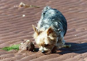 Tango sniffing seaweed