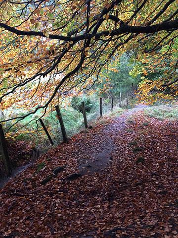 Five-Mile Wood