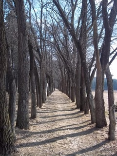 Path leading to the woods
